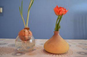 Лук и тюльпан на столе
