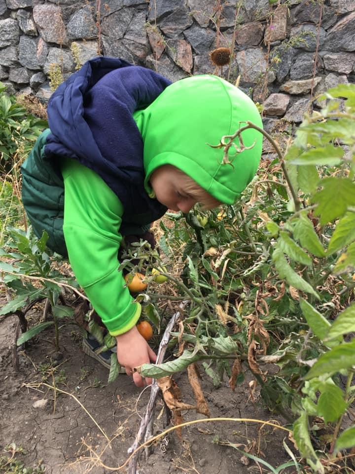 Ребенок собирает урожай